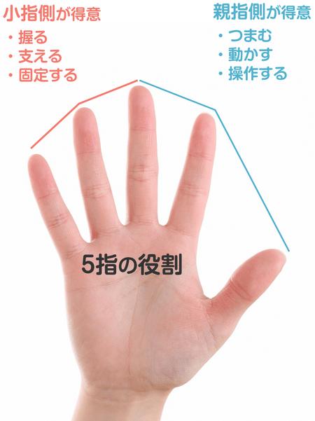 各指が得意とする役割